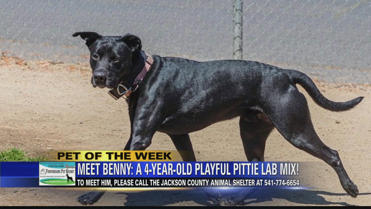 Image for Pet of the Week: Benny and Susie