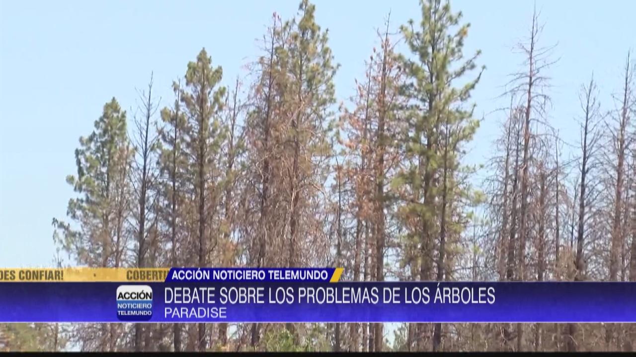 Image for Fecha se aproxima para eliminar árboles peligrosos en Paradise