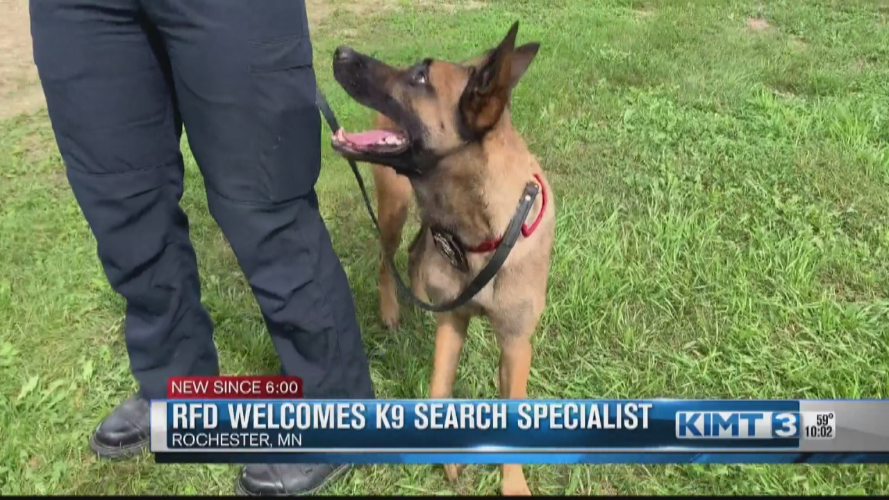 Image for Work hard, play hard: RFD welcomes impressive K9 search specialist