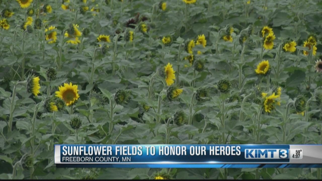 Image for Sunflower fields in Albert Lea area dedicated to hometown heroes