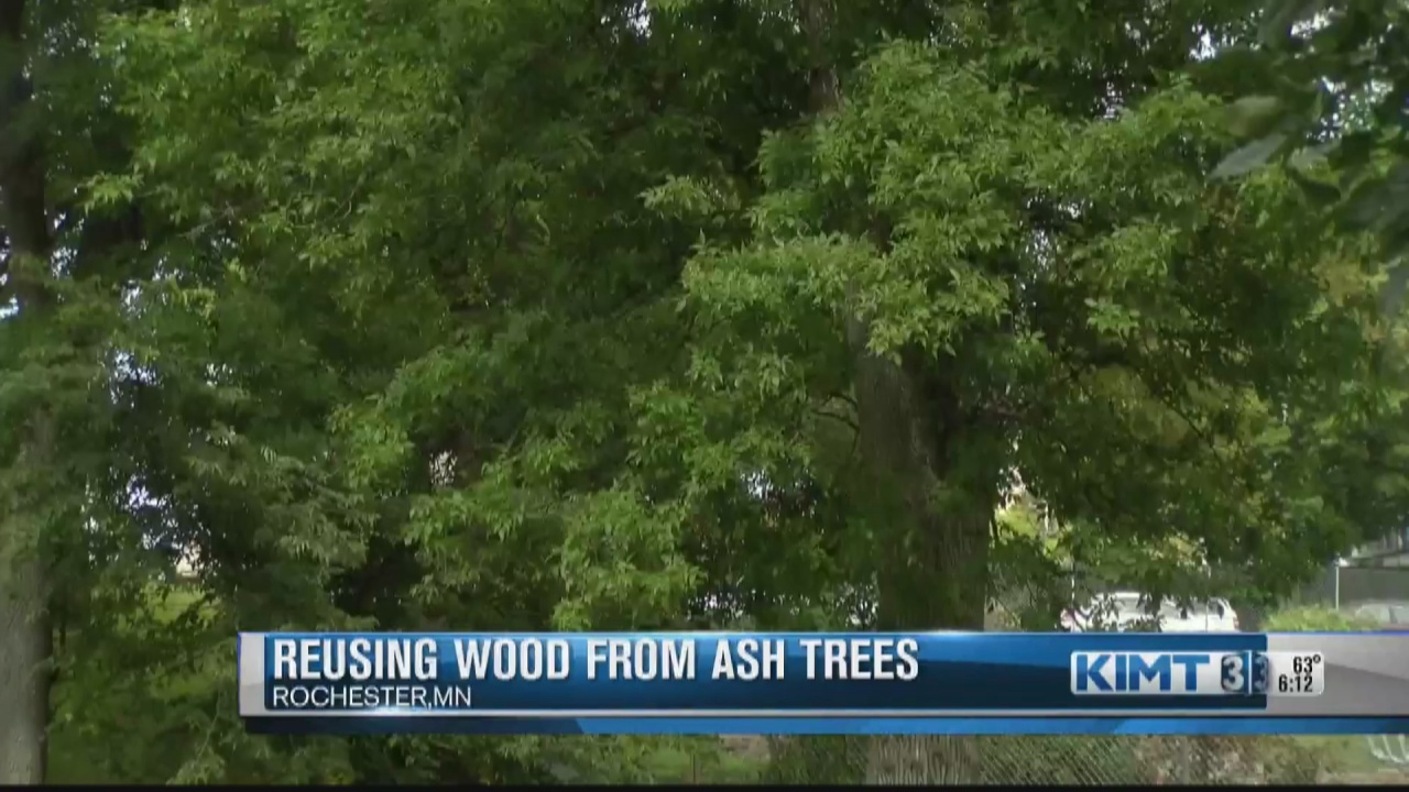 Image for Rochester Urban Forestry reusing wood from ash trees for projects