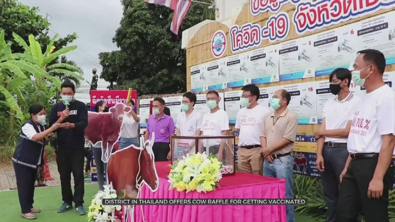 District In Thailand Offers Cow Raffle To Promote COVID-19 Vaccinations