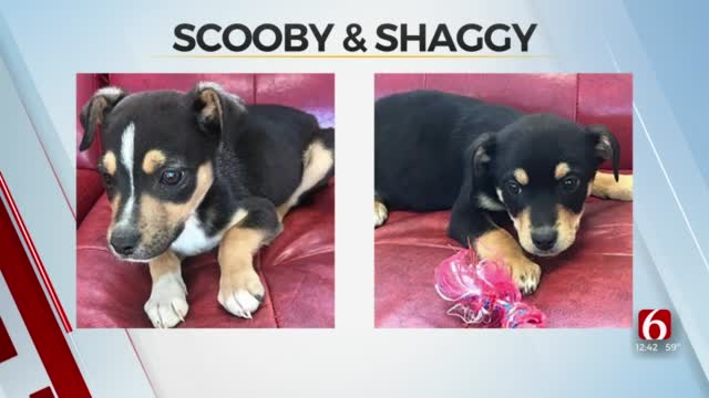 Pet Of The Week: Scooby & Shaggy