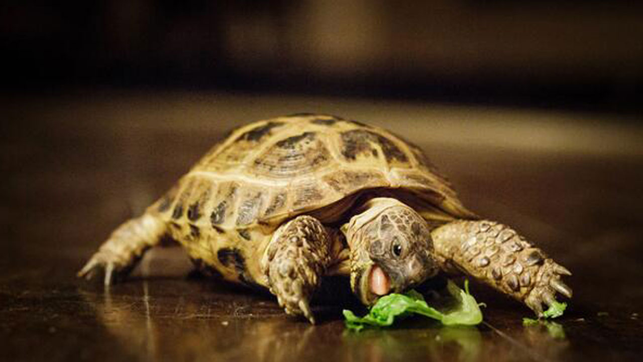 Former OKC Zoo Employee Pleads Guilty To Trafficking Endangered Baby Tortoises