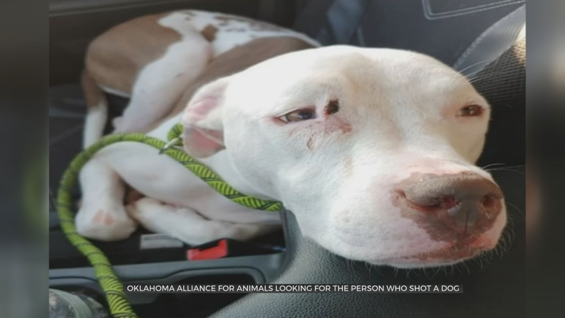 Oklahoma Alliance for Animals Wants Answers After Dog Shot In The Head