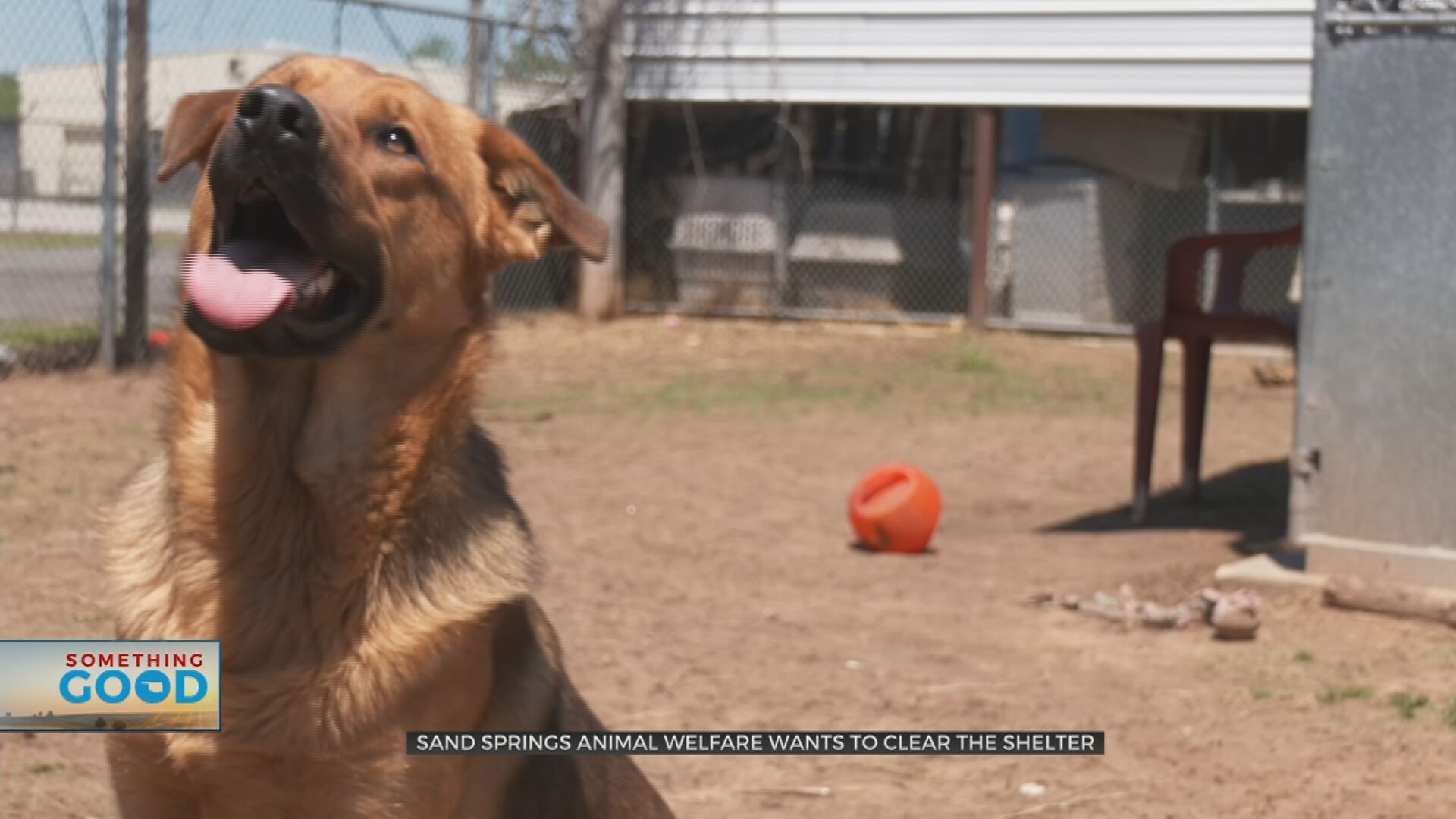 Clear The Shelter Event: Sand Springs Animal Welfare Has Your Next Best Furry Friend