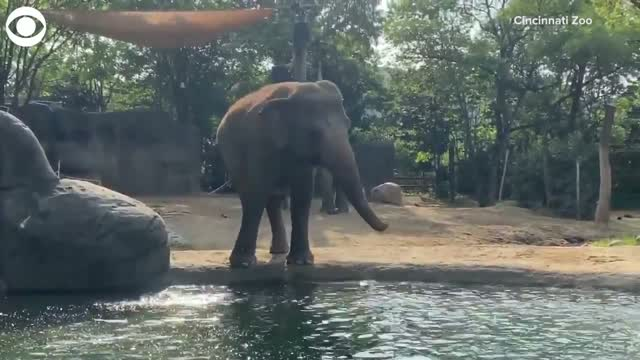 Watch: Elephant cools down on World Elephant Day
