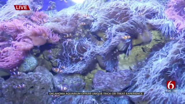 Oklahoma Aquarium Offers Unique Trick-Or Treat Experience
