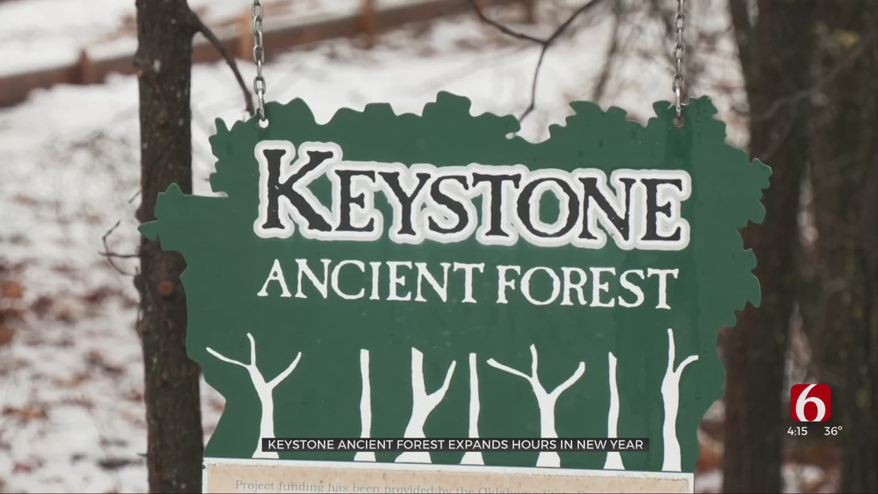 Staff Expansion Spurs More Hours At Keystone Ancient Forest