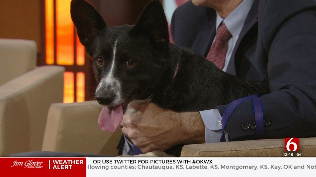 Melvin, News On 6 Pet Of The Week For 1-10-202