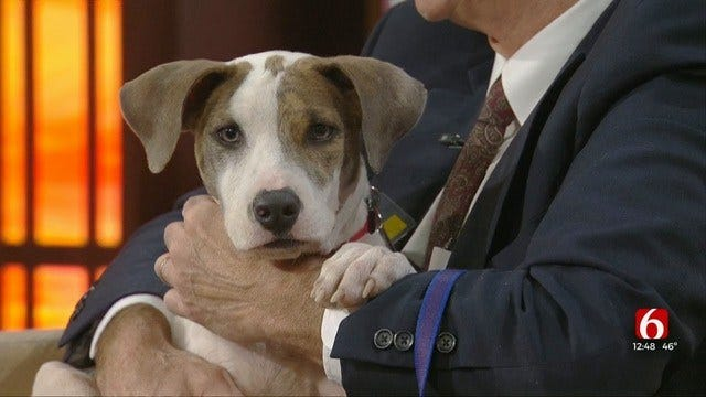 Marlowe: News On 6 Pet Of The Week For 10-25-2019