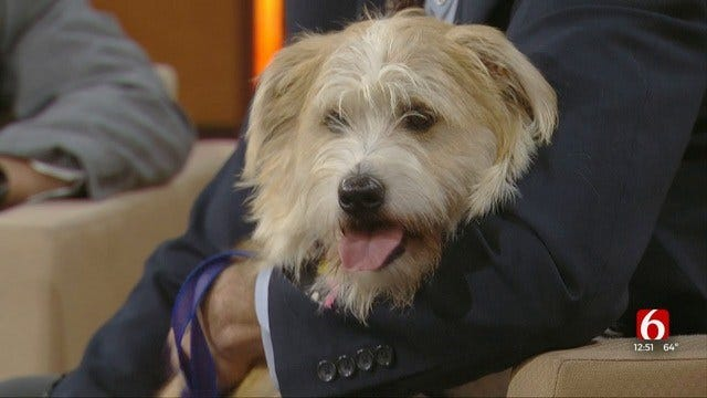 Benji: News On 6 Pet Of The Week For 10-18-2019
