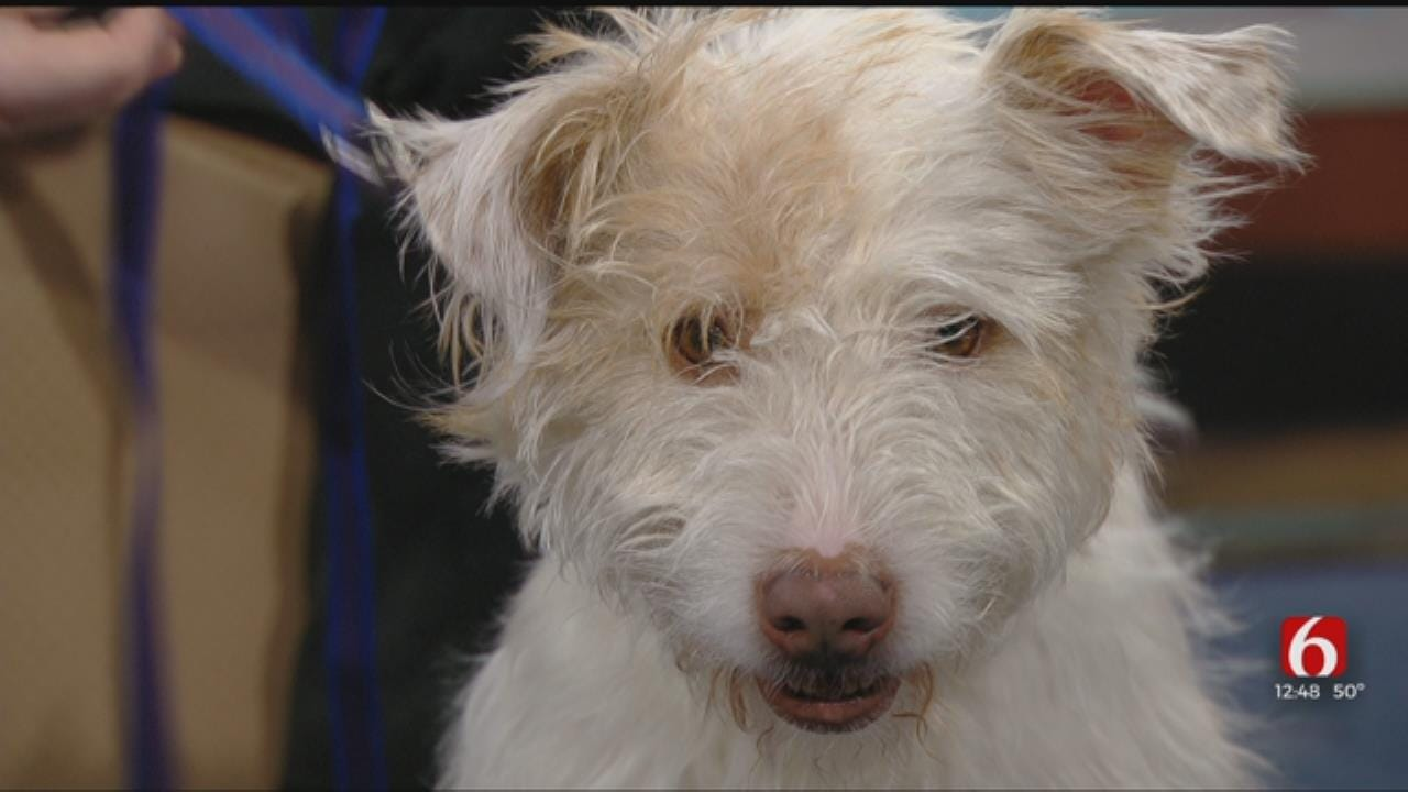 Hallee: News On 6 Pet Of The Week For 3-15-2019