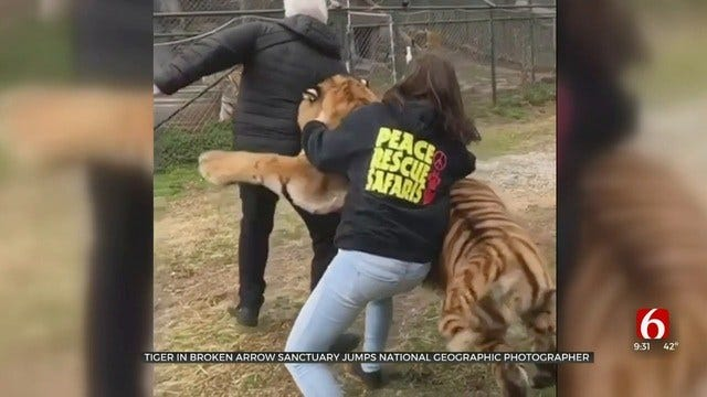 WATCH: National Geographic Photographer Jumped By Broken Arrow Tiger
