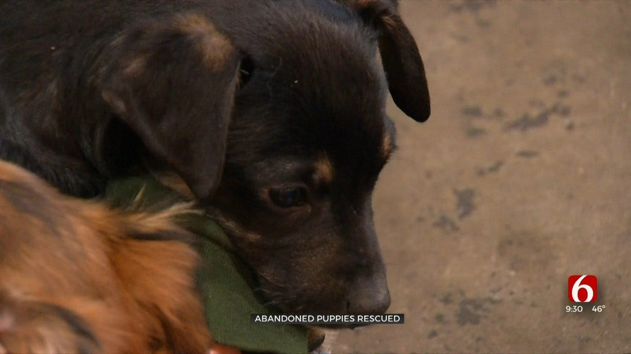 17 Puppies Rescued, Need Adoption After Abandoned In Muskogee County