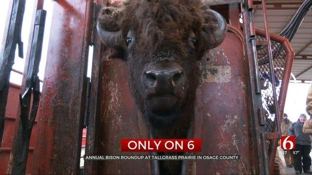 Osage County Tallgrass Prairie Preserve Marks 30 Years Under Nature Conservancy