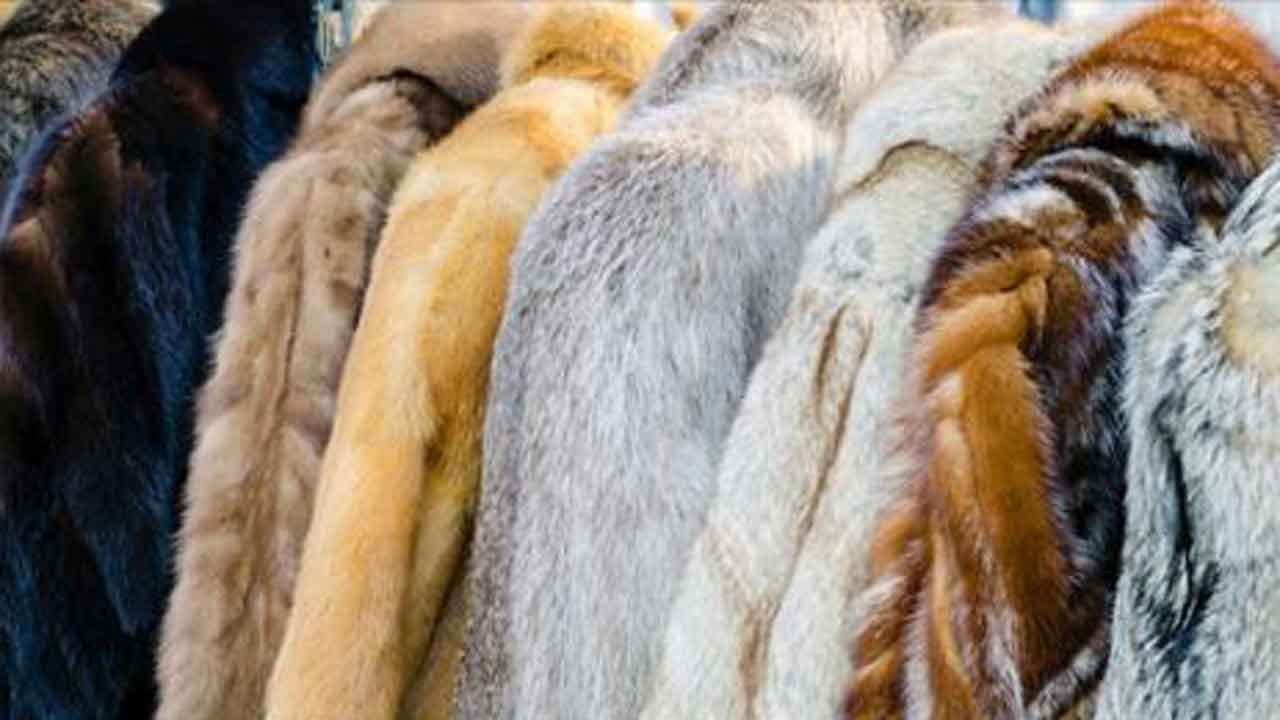 Macy's Announces It Will Stop Selling Fur By End Of 2020 Fiscal Year
