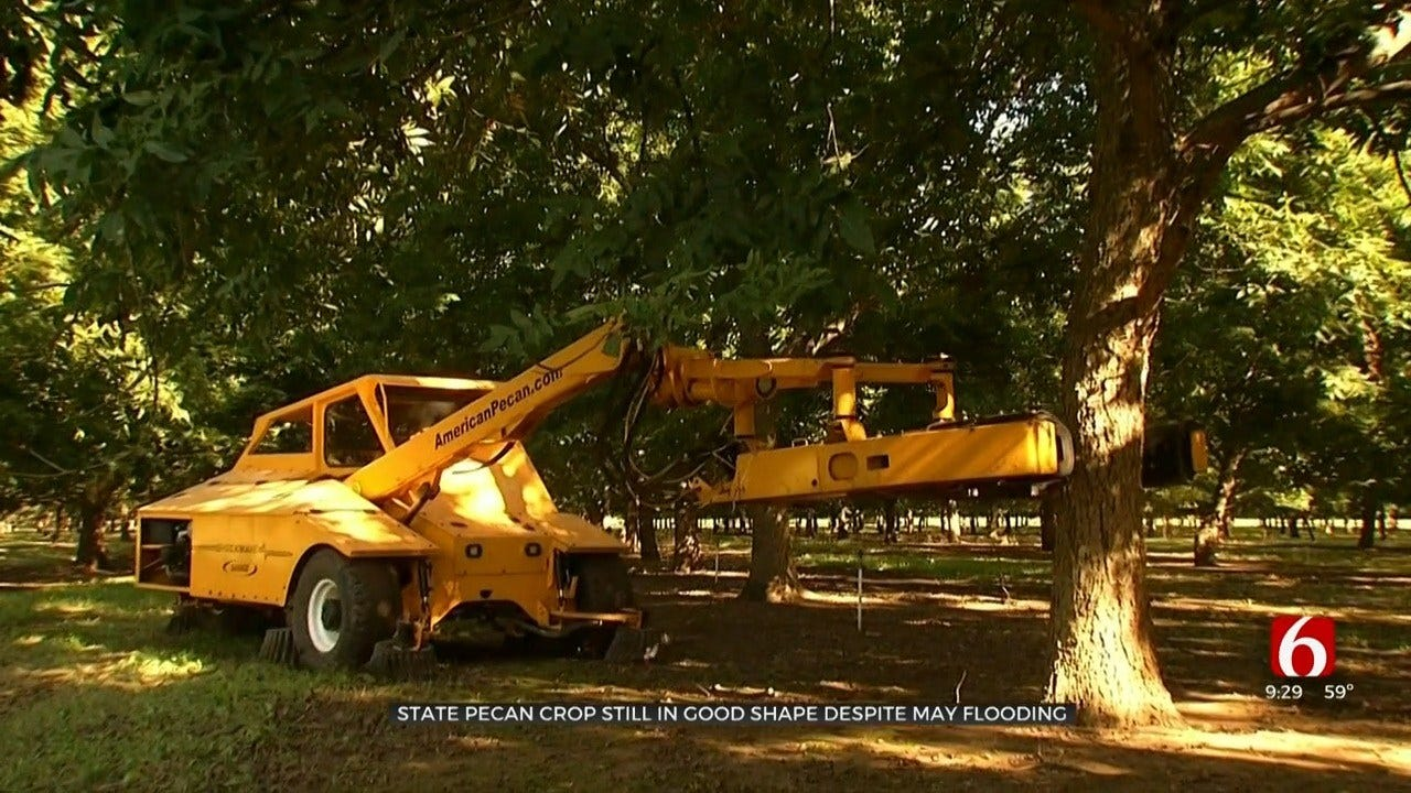 Oklahoma Pecan Harvest Sees Impact Of May's Flooding
