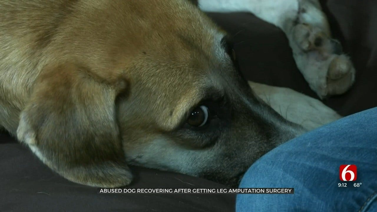 Dog Found In Locust Grove Recovers After Being Left For Dead