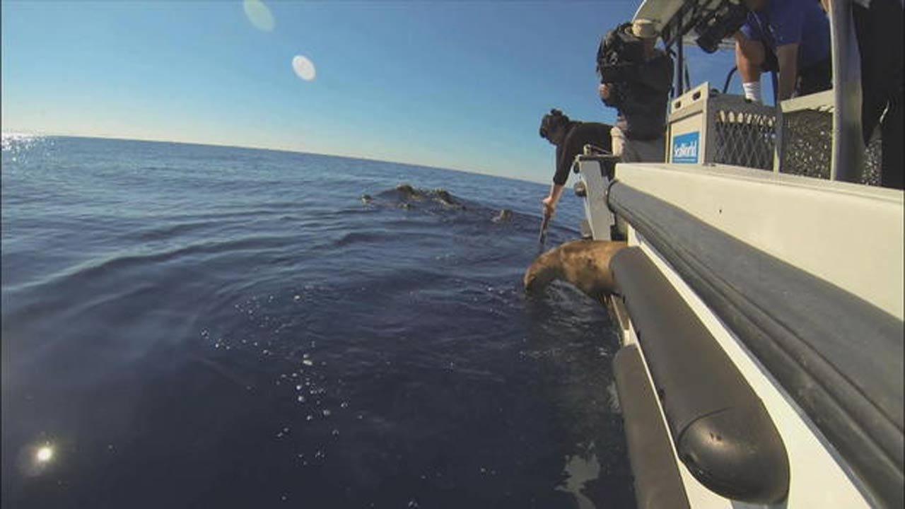 "Pacific Ocean ""Blob"" Harming Marine Life"