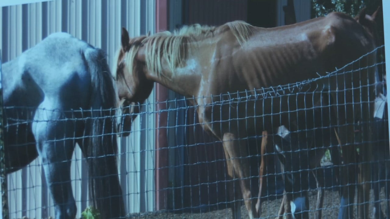 Creek County Deputies Investigating Animal Abuse Case