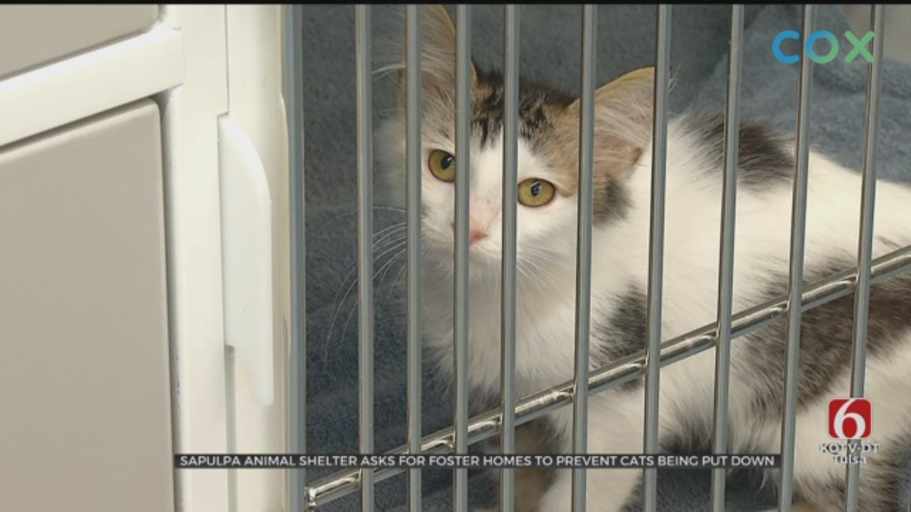 Sapulpa Animal Shelter May Have To Euthanize Cats To Avoid Disease Spreading
