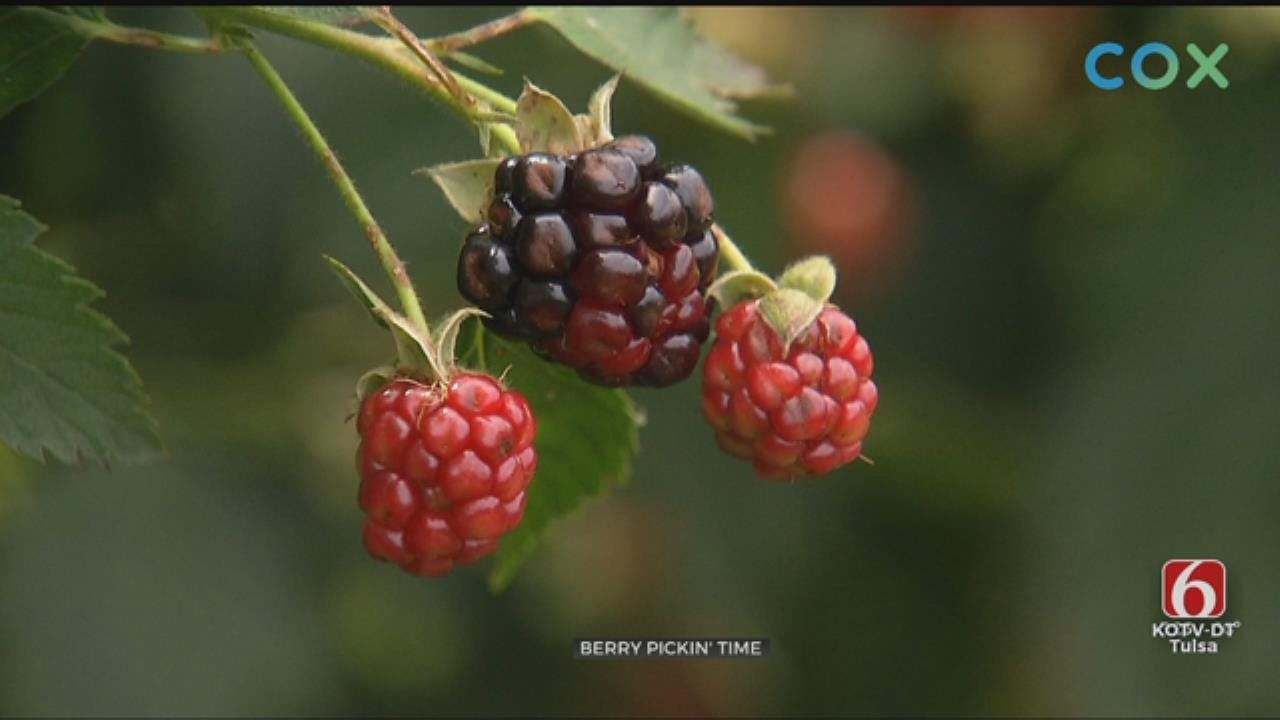 Mounds Couple Has Berries Ripe For The Picking