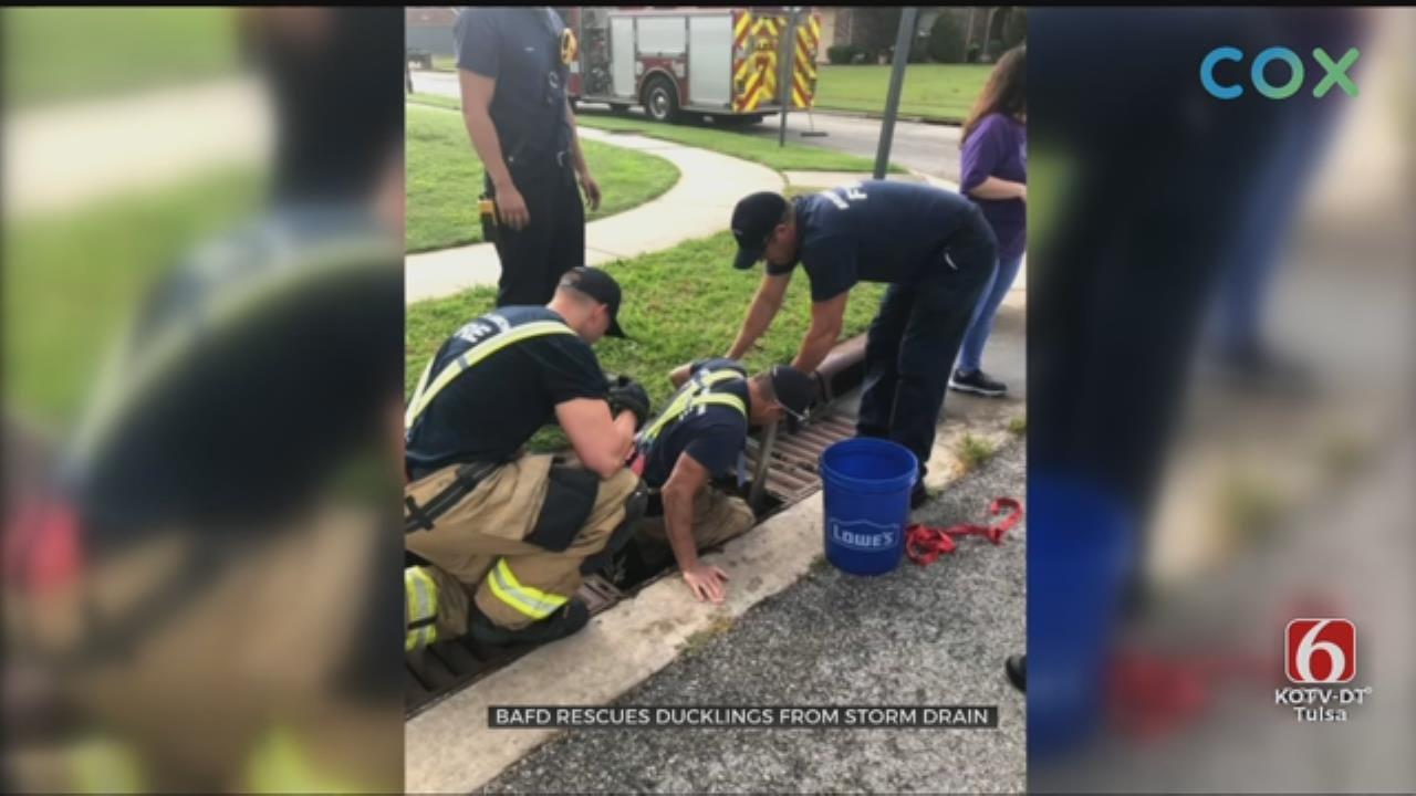 Broken Arrow Firefighters Rescue 5 Ducklings From Storm Drain