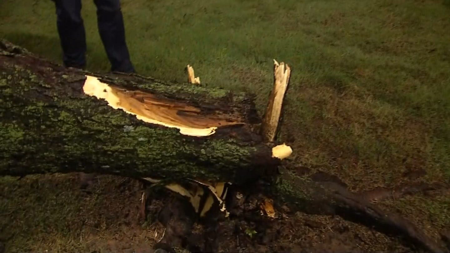 Storms Take Down Several Trees Across Tulsa County