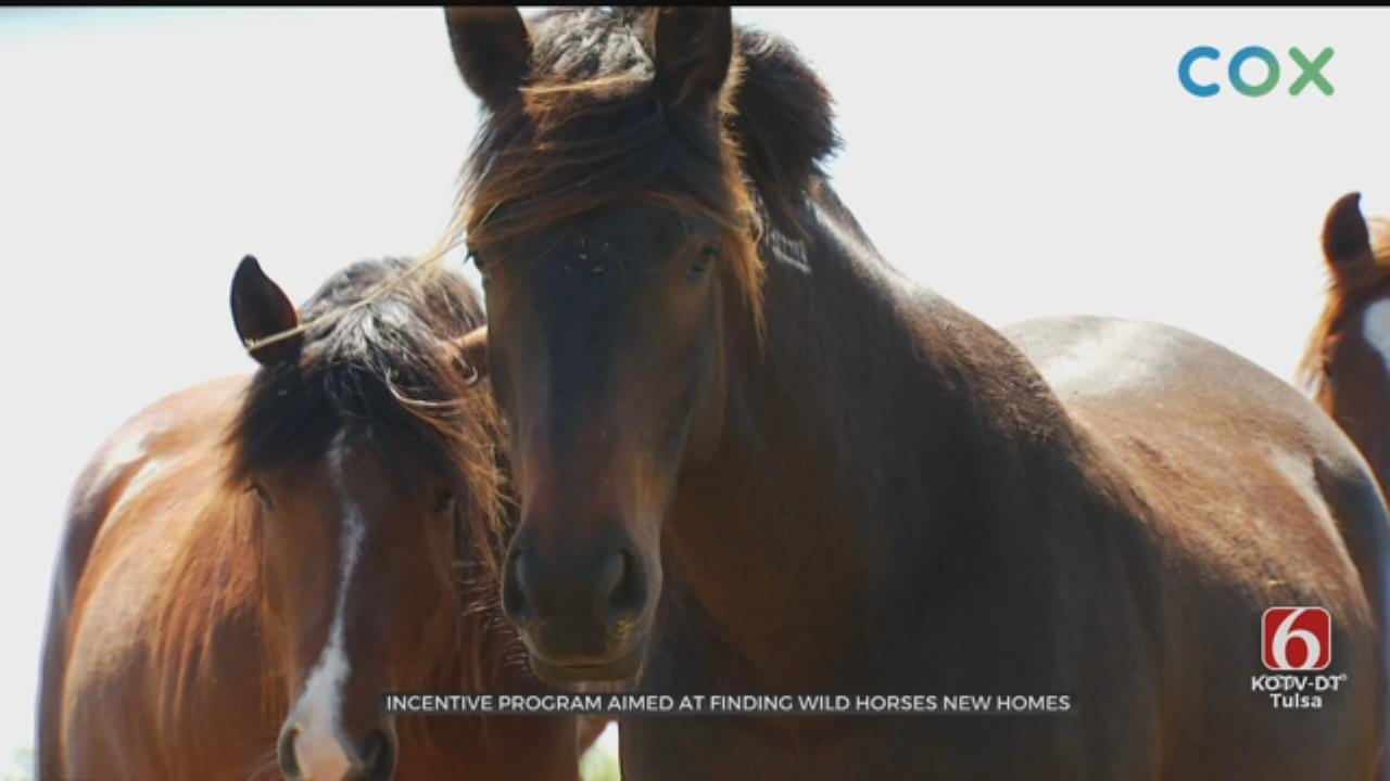 New Incentive Program Aims To Find Homes For Oklahoma's Wild Horses