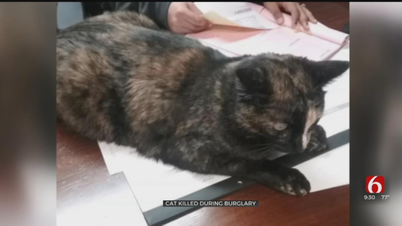 Office Cat Killed During Tulsa Office Robbery