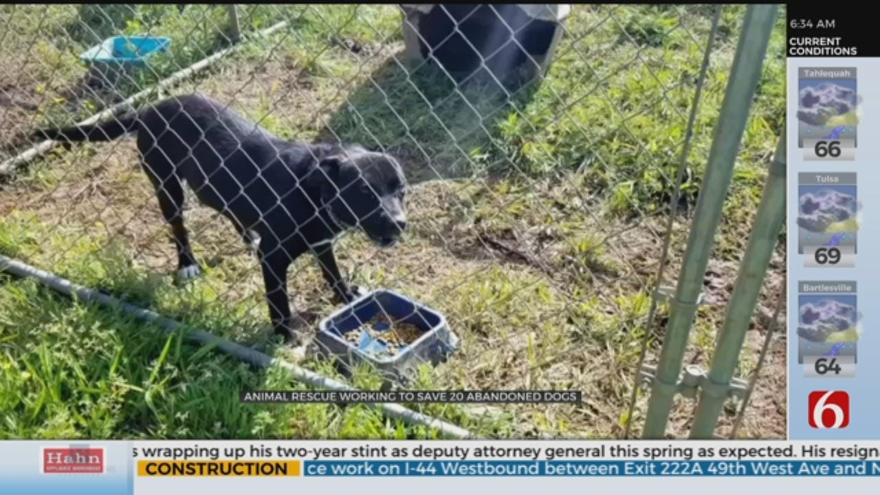 Stigler Rescue Works To Help 23 Abandoned Dogs