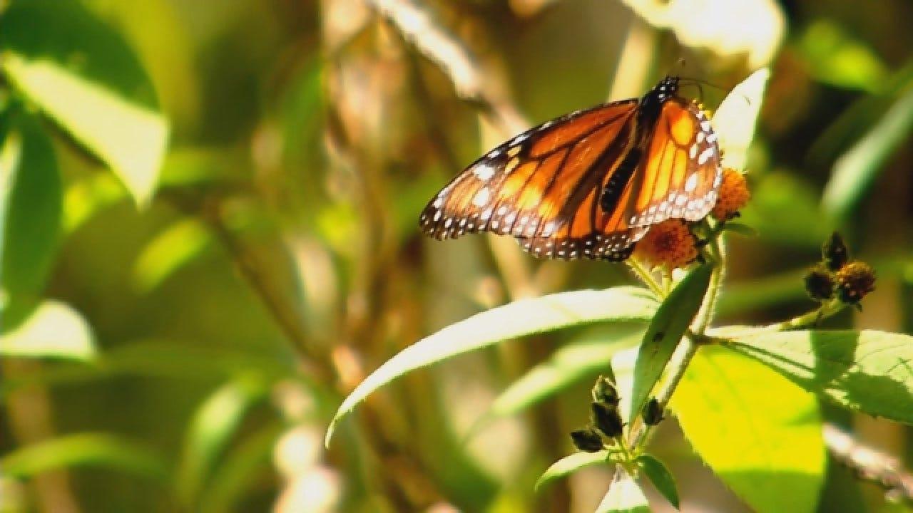 Oklahomans Travel To Monarch Sanctuaries In Mexico