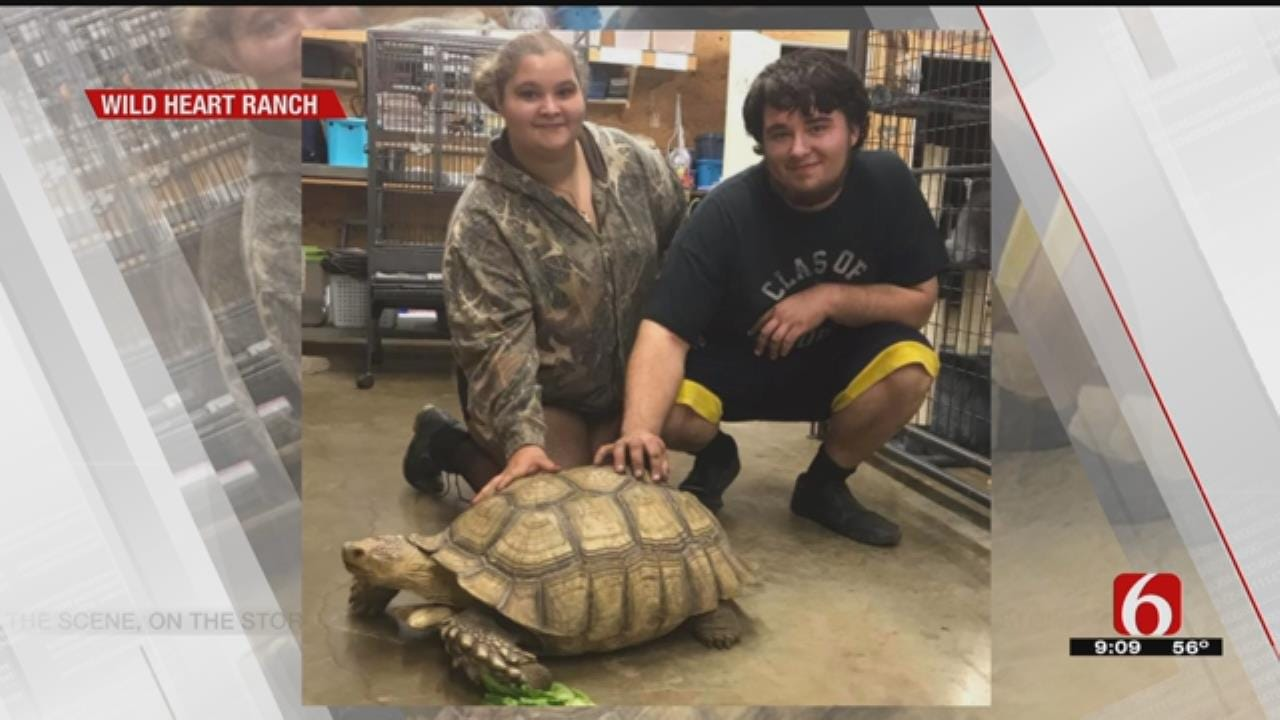Claremore Woman's Missing 80-Pound Tortoise Has Been Found