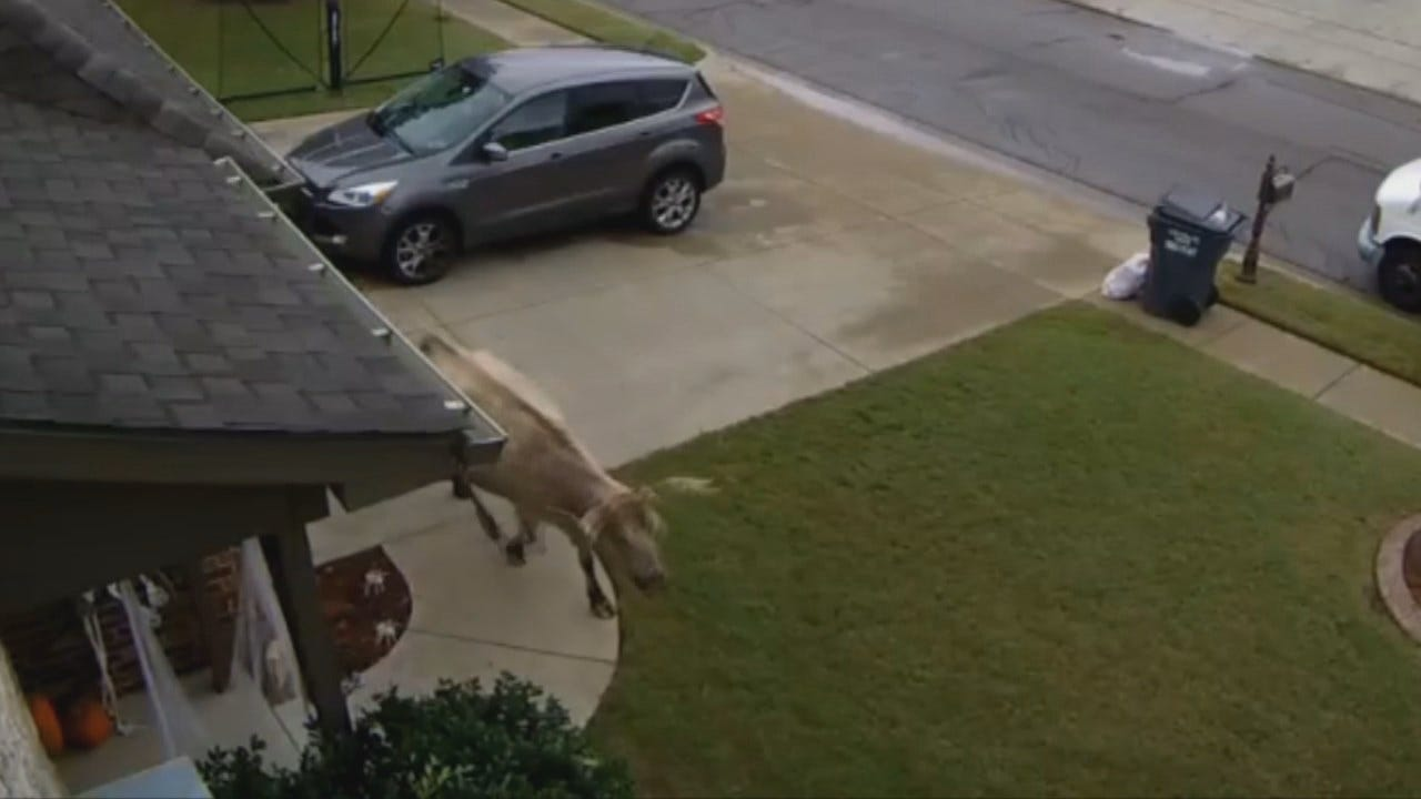 WEB EXTRA: Jenks Home Security Video Of Unusual Visitor