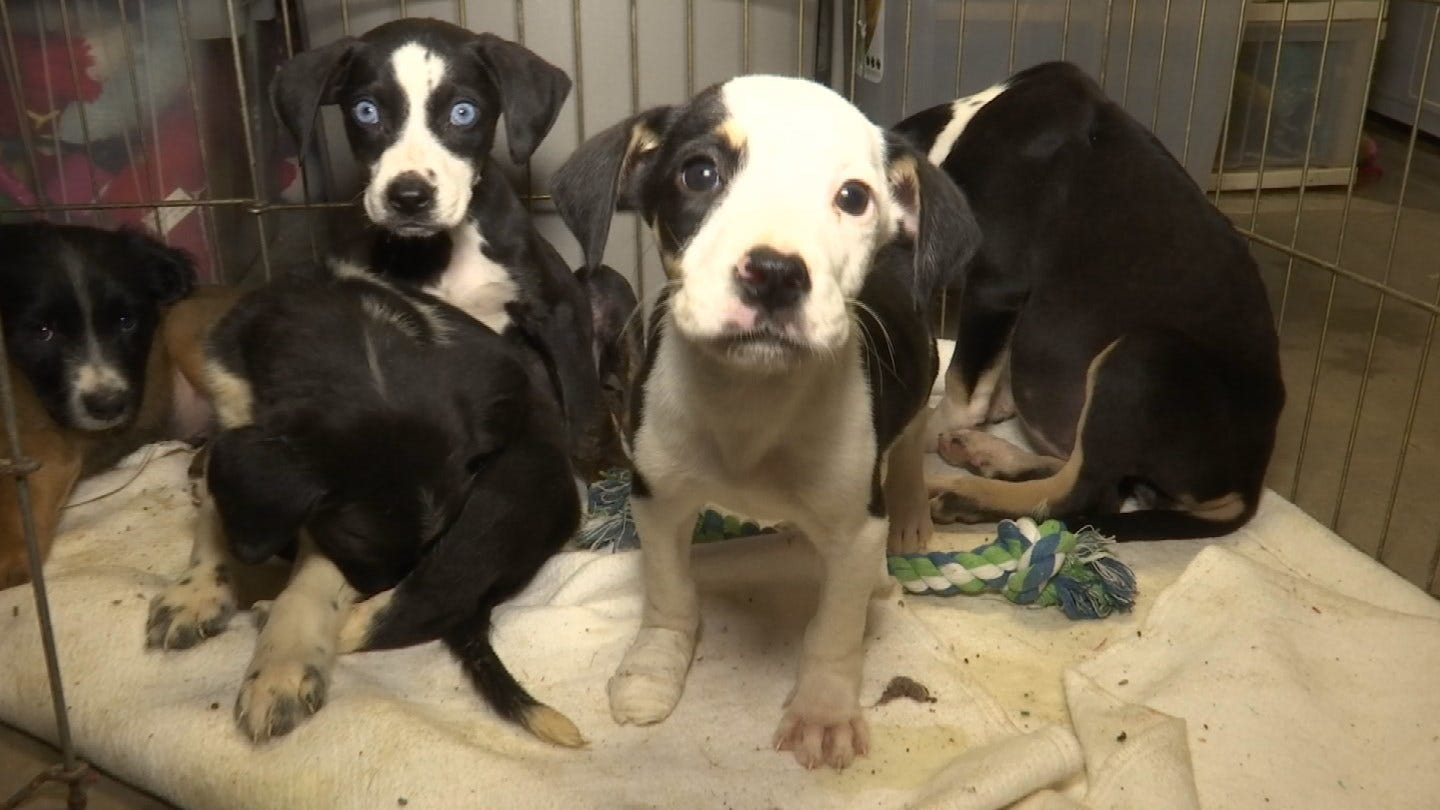 Sapulpa Animal Shelter Struggling With Overcrowding