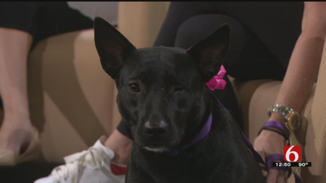 Don't Miss Woofstock Pet Adoption Event And Festival Saturday