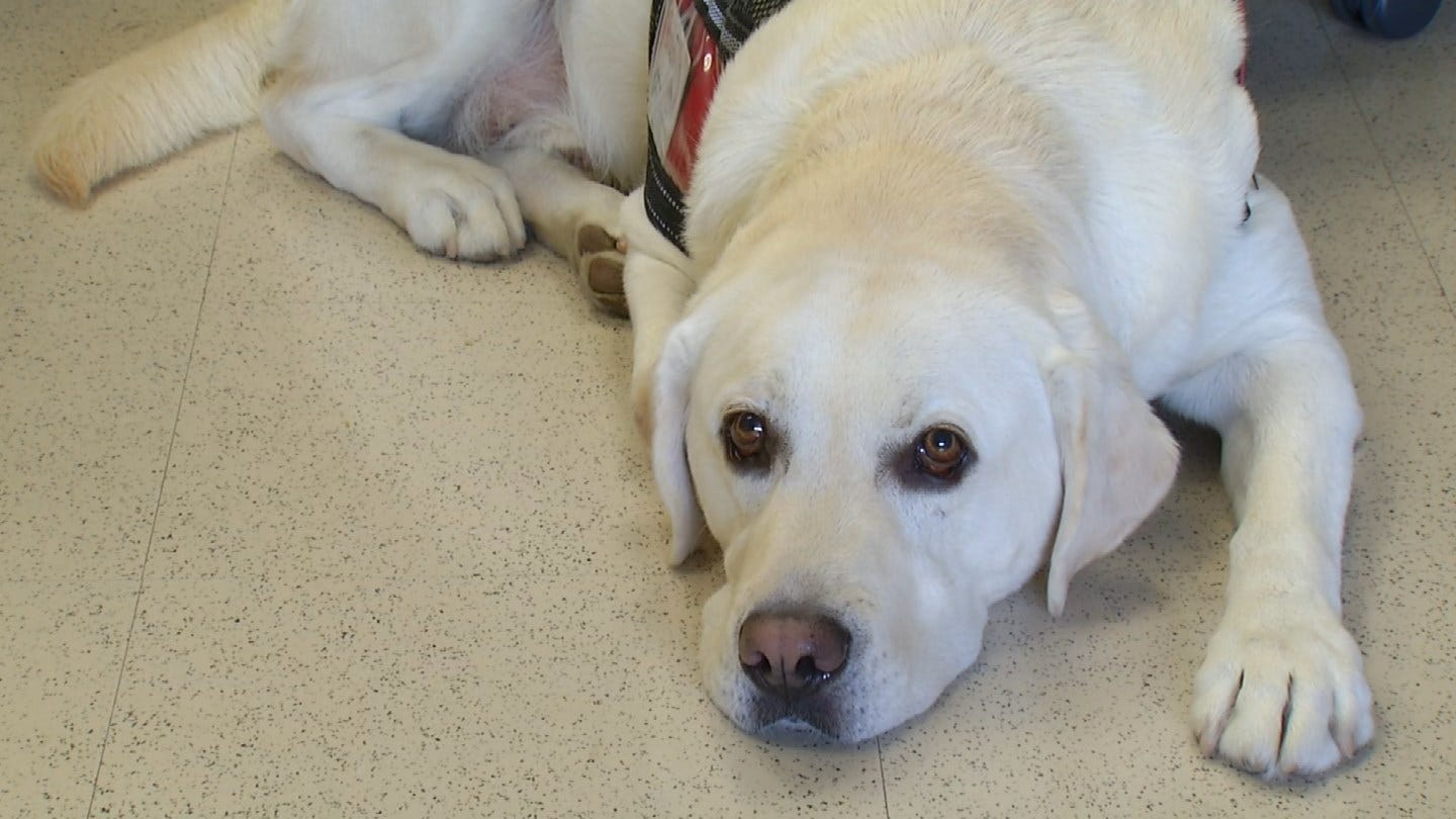 Tulsa Students Learn From Service Dog