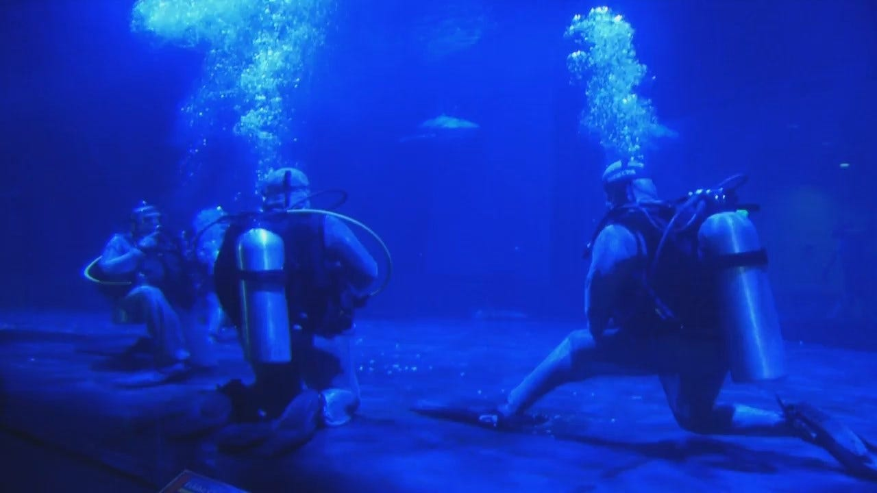 WEB EXTRA: Video Of Edmond Native Jodi Cooper Swimming With The Bull Sharks