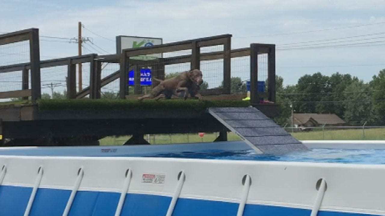 Dog Dock Diving Facility Opens In Broken Arrow