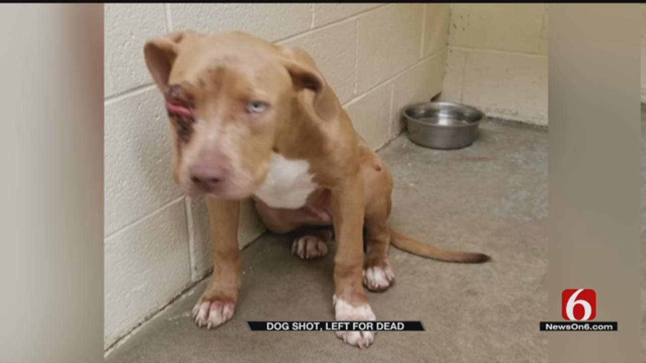 Reward Offered In Okmulgee For Information In Animal Cruelty Case