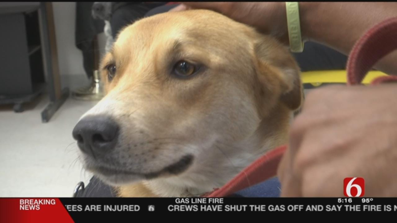 Program Using Inmates To Train Service Dogs For Veterans