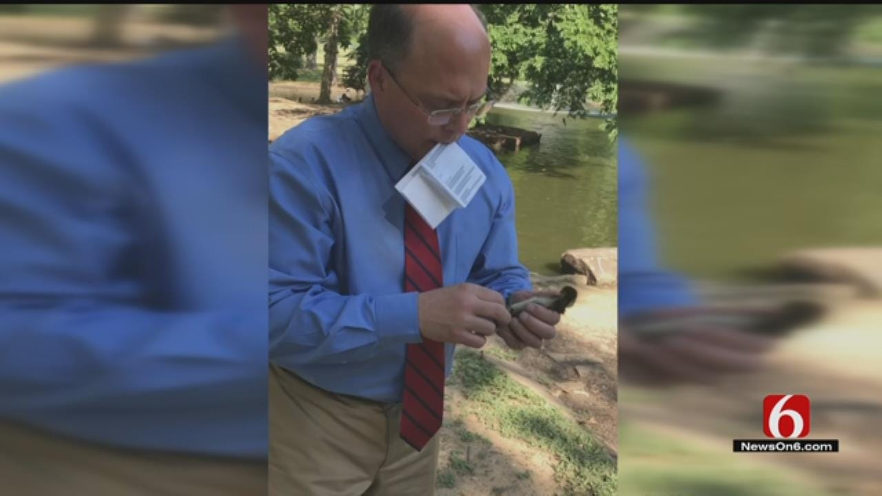 Reporter Emory Bryan Saves Duckling At Tulsa Park