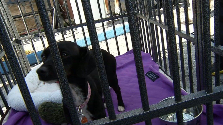 """Ritas For Rescue"" Event Raises Money For Homeless Pets"