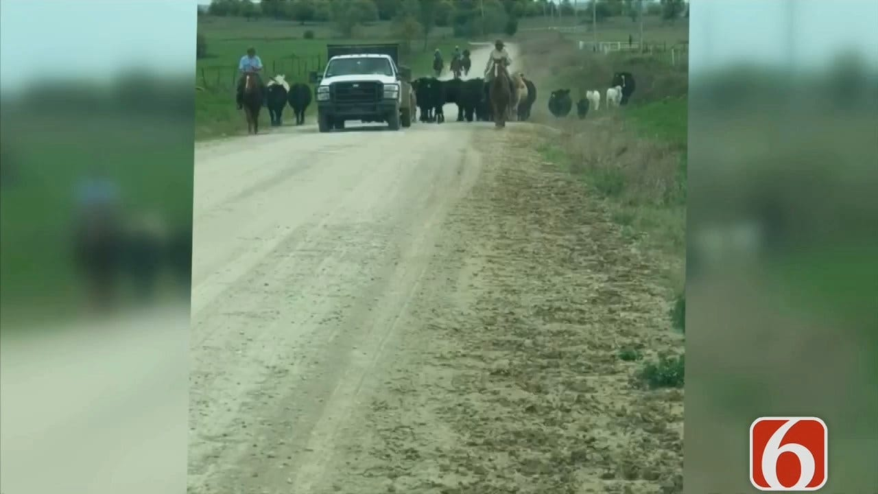 Osage County Cattle Drive Caught On Video