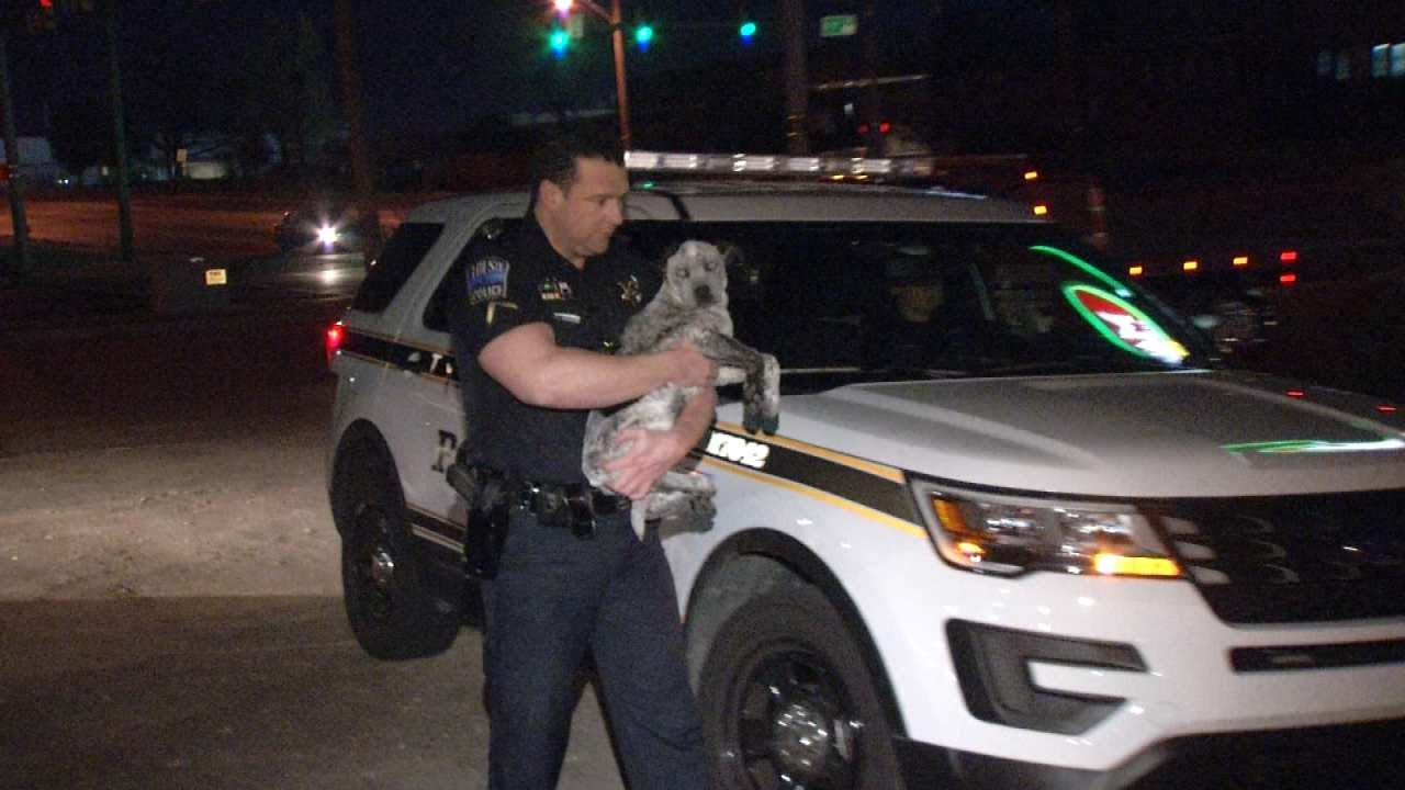 Abandoned Dog, Generator Discovered In Stolen Truck