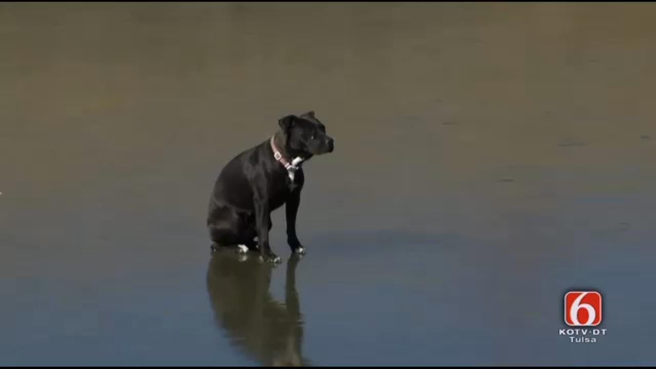 RESCUE: Dog Stuck On Frozen Pond In Tulsa