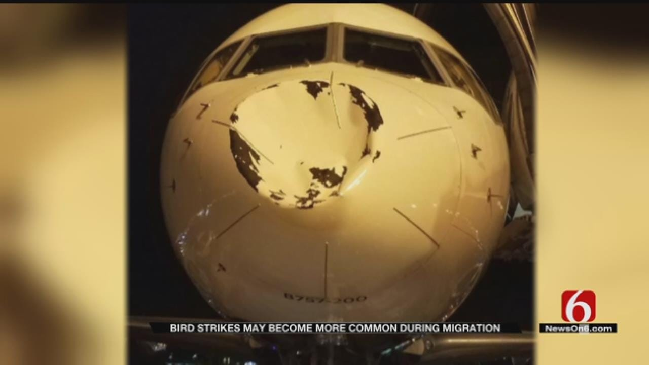 Bird Collision Risk Increases For Pilots During Migration Season