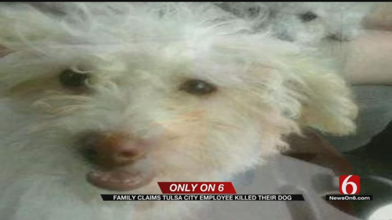 Dog Dies After Being Beaten With Metal Rod In Tulsa