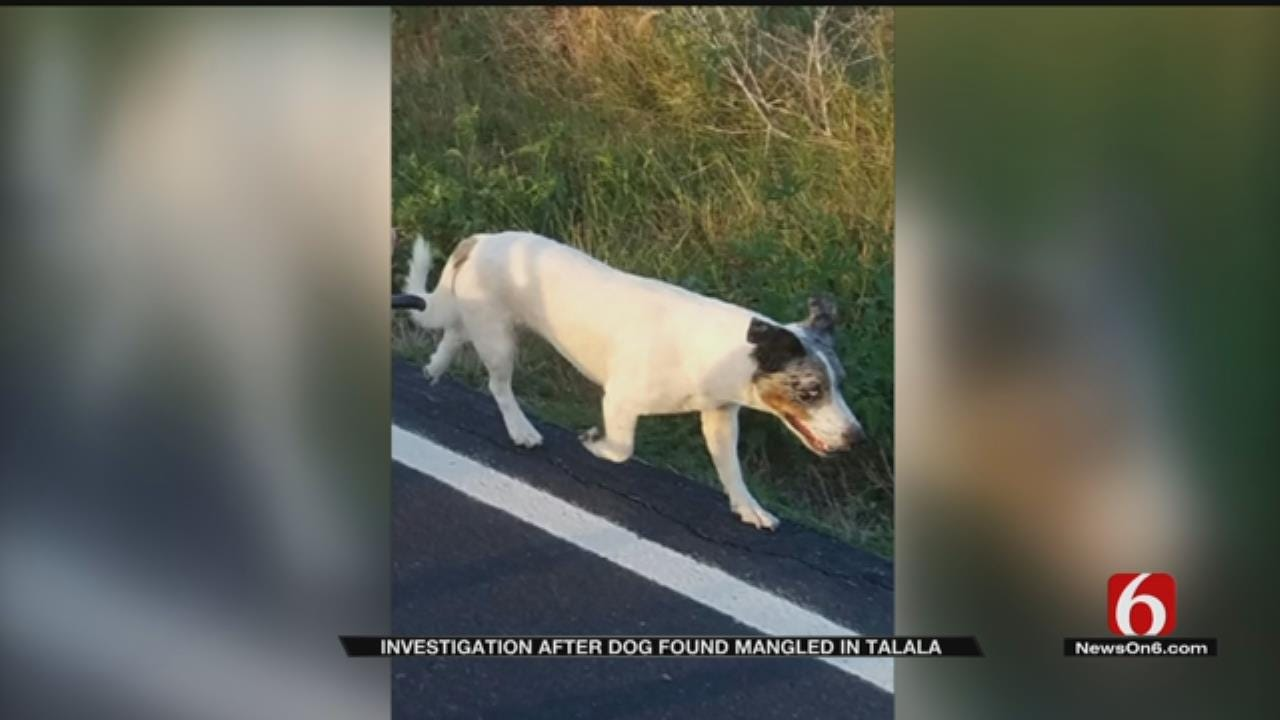 Dog Found With Intestines Pulled Out In Rogers County